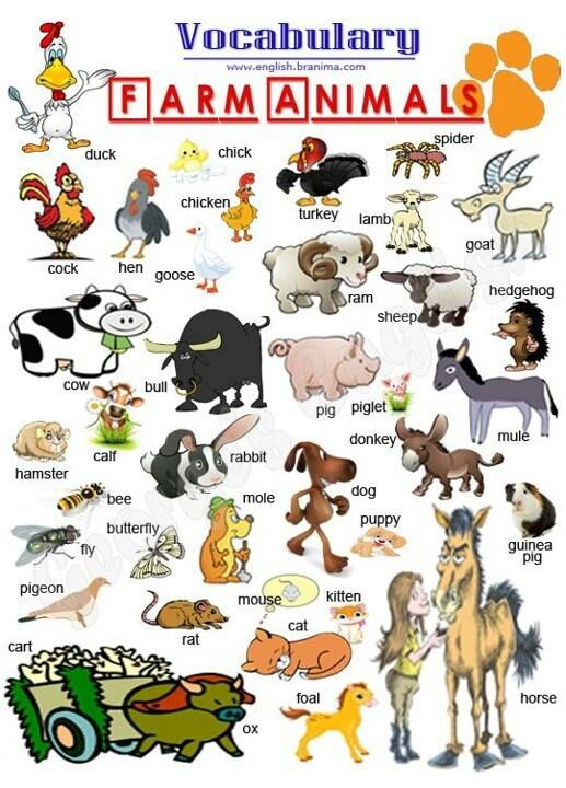 essay on animals for lkg students Dog essay 1 (100 words) the scientific name of a dog is canis lupus familiaris it is a domestic animal it comes under the category of mammals as it gives birth to a baby and feed milk.